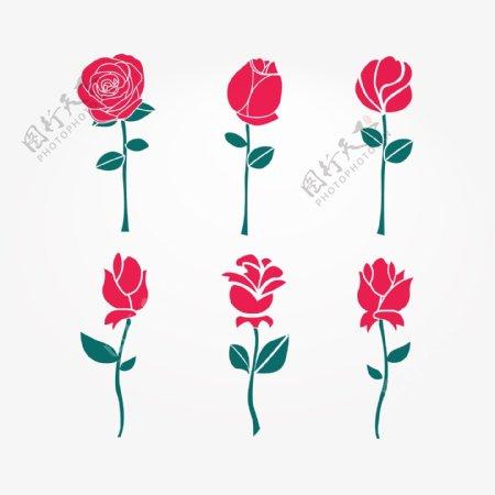盛开的玫瑰花