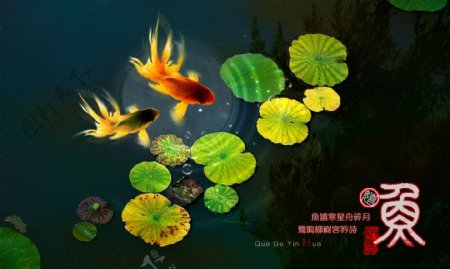 鱼金鱼图片