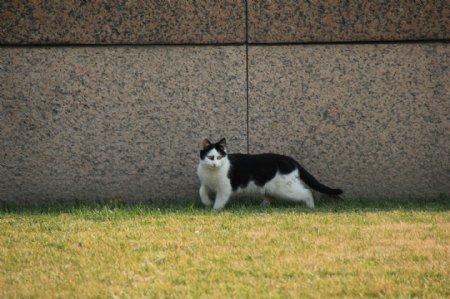 室外的小猫