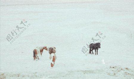 冰天雪地生存图片