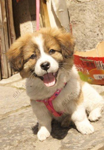 开心的狗狗图片