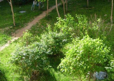 绿化植物图片