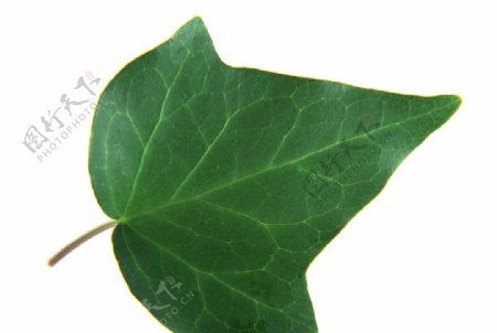 图片素材植物叶媚叶子花草摄影图库