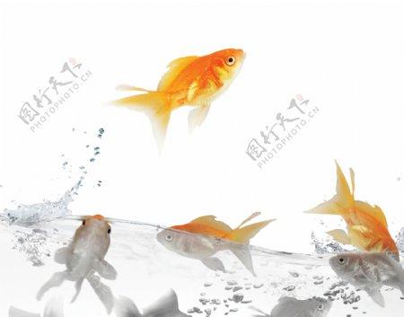 污染的水与钓鱼素材图片