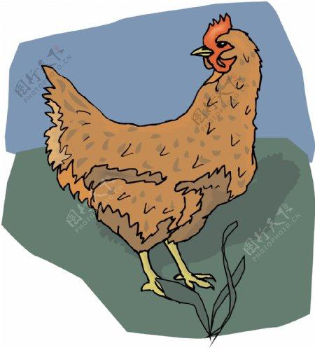 家禽家畜动物矢量素材EPS格式0065