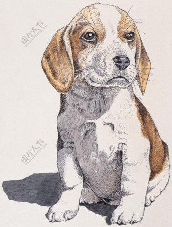 狗家禽家畜动物插图12