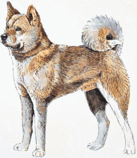 狗家禽家畜动物插图19