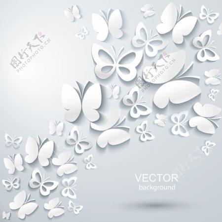 白色蝴蝶图片
