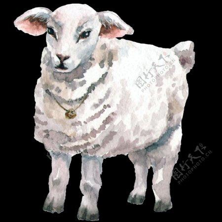 手绘毛茸茸山羊装饰图案
