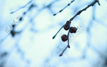 春天的花苞