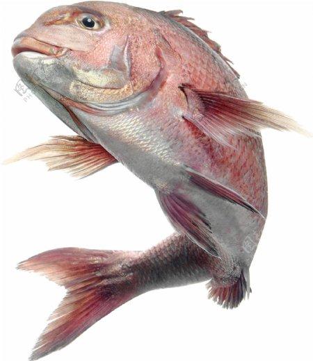 鱼类飞鱼鲤鱼元素