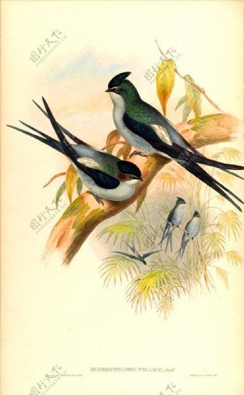 手绘小鸟彩色插画手绘鸟类