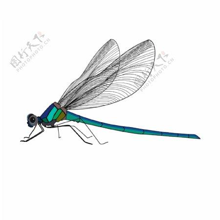 简约创意手绘风动物昆虫蜻蜓可商用元素