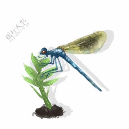昆虫手绘中国风蜻蜓元素免扣可商用素材
