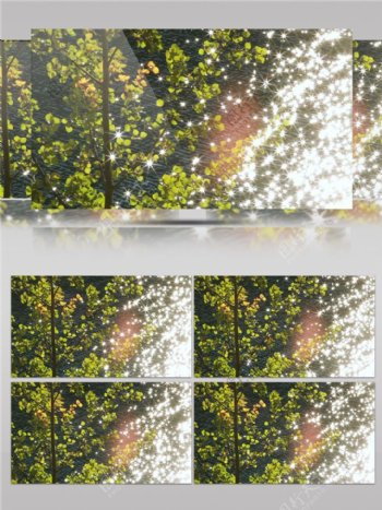 波光粼粼的河面树叶视频素材
