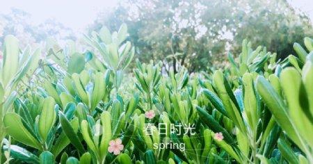 绿色的春天