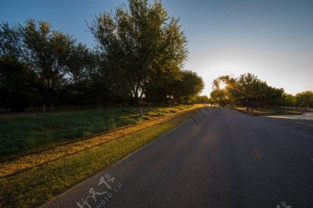 金色的阳光在清晨的背景照射公园