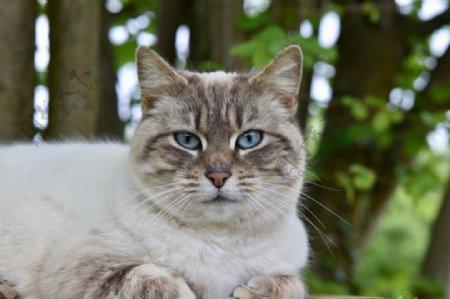 猫图片家禽家畜