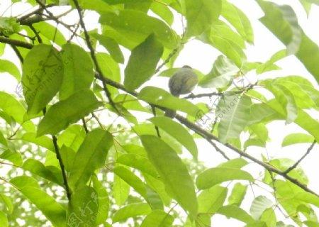 绿荫下的小鸟