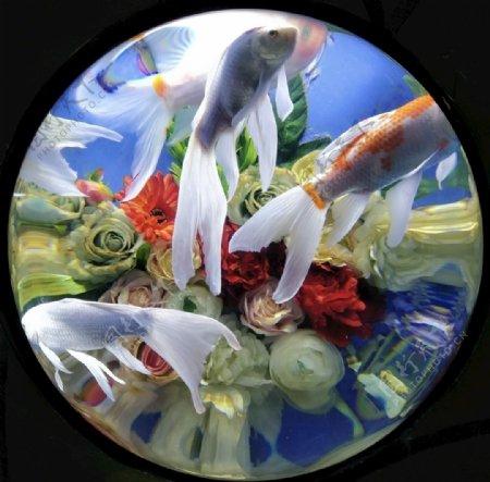 鱼儿水中游素材