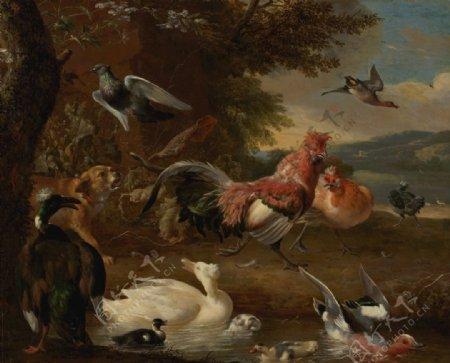 家禽家畜公鸡鸭子绘画