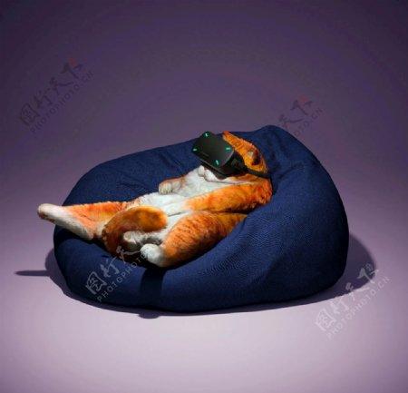 搞笑猫咪看VR