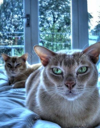 两只躺沙发上生气脸的家猫