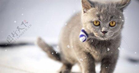 可爱宠物壁纸霸气猫咪照片