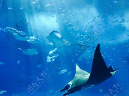 海洋鱼生物自然背景素材