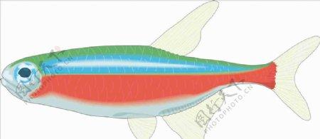 四分鱼手绘矢量海洋鱼