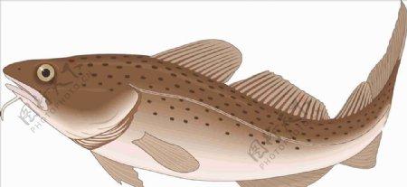 真鳕鱼海洋鱼矢量手绘