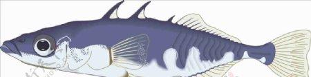 三文鱼海洋鱼