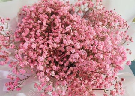 满天星粉色光影花卉花卉特