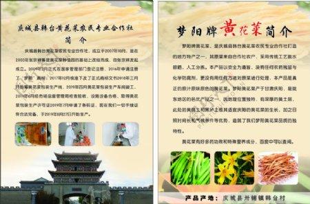 黄花菜宣传彩页