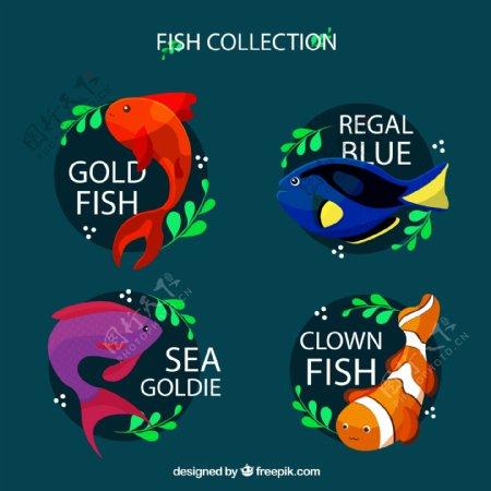 彩色带名字的鱼类图片