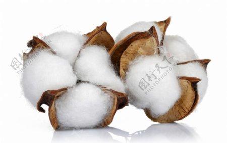 白色背景上的棉花球图片
