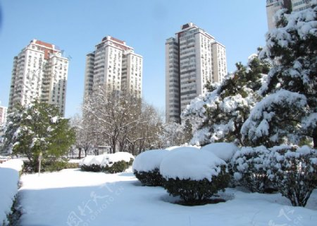 雪景高楼图片