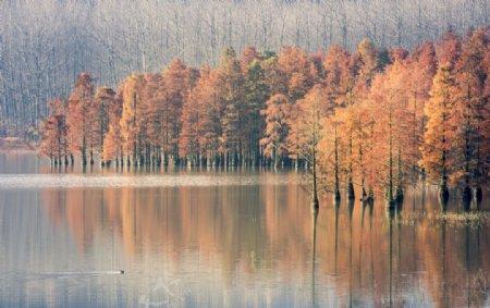 秋季森林自然风景背景海报素材图片