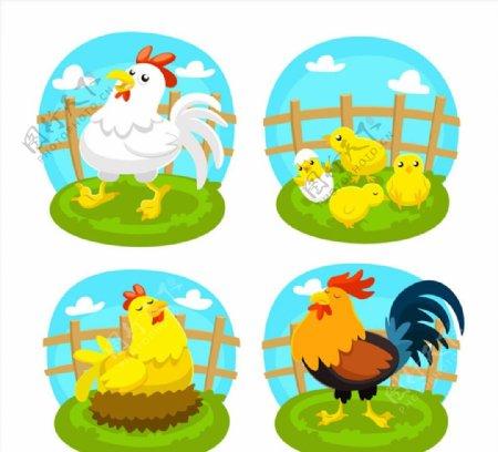 可爱农场鸡矢量图片