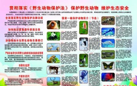 保护野生动物展板PSD分层可编图片
