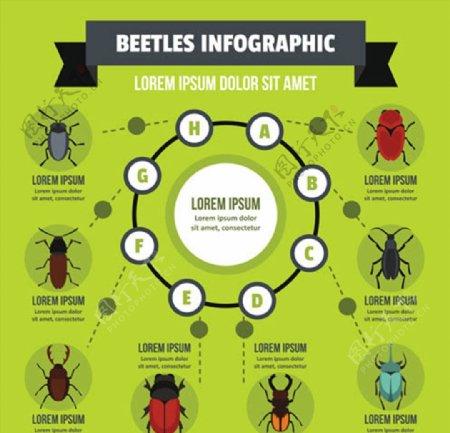 昆虫信息图表图片