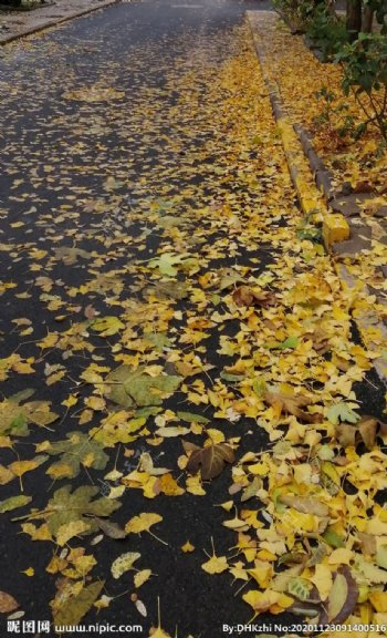 秋日落叶枫叶图片