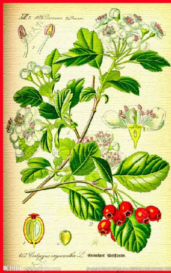 花草植物小清新图片