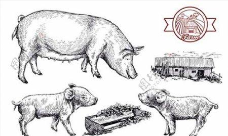 素描黑白家猪图片