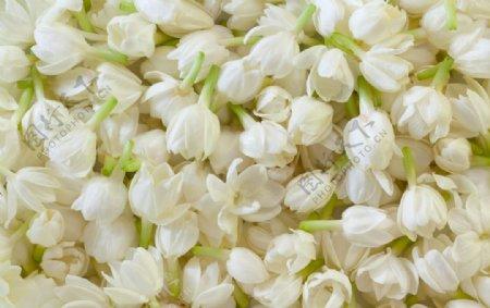 茉莉花瓣图片