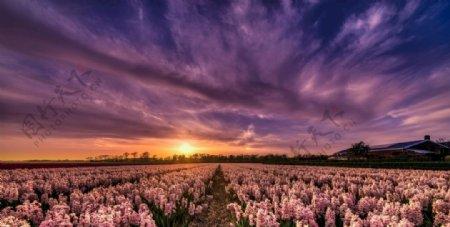 花草背景图片