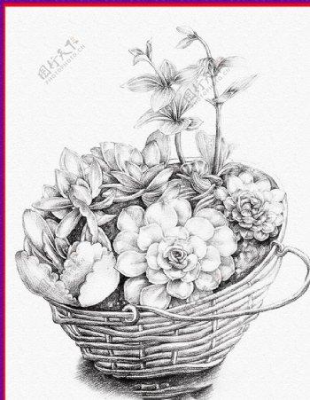 素描一篮子花图片