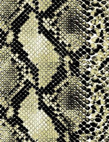 蛇纹印花回位图图片