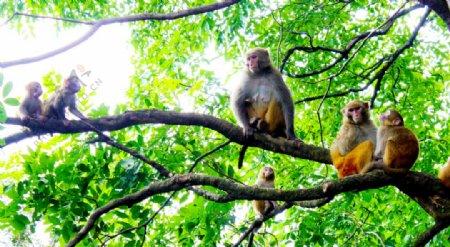 景区树上猴子图片