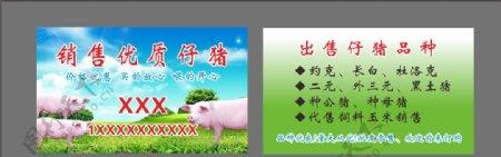 销售仔猪名片图片